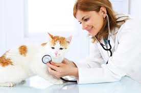 Disertasi Kedokteran Hewan [ Kode D. 22]  Disertasi Opto-Elektroteknika Dan Aplikasi Laser [ Kode D. 18] Dokter Hewan